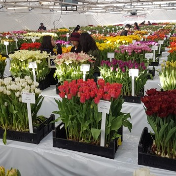20171208 - Dates for the third Tulip Trade Event 14 - 16 March 2018 - photo 1