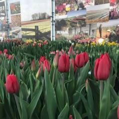 Tulip Trade Event 2018 FB 02