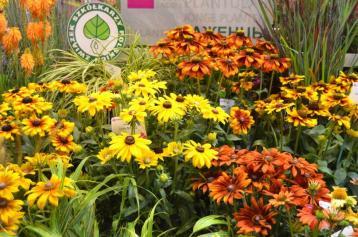 Vitroflora stand ©theflorajournal
