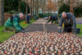 Planting bulbs ©Keukenhof