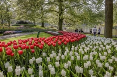 Tulip composition ©Keukenhof