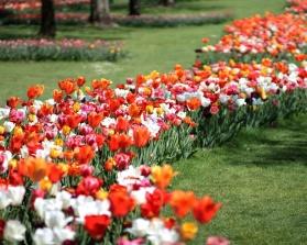 tulipomania ©parcosigurta