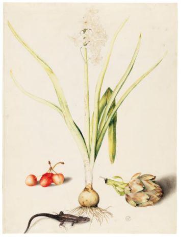Hyacinth with Four Cherries, a Lizard, and an Artichoke ©Florence, Gallerie degli Uffizi, Gabinetto dei Disegni e delle Stampe