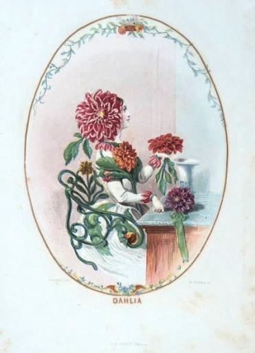 Dahlia, colored etching ©Palazzo Coronini Cronberg Foundation.