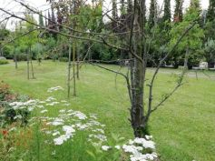 Healing garden Mati 03