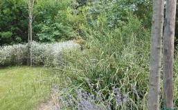 Healing garden Mati 07
