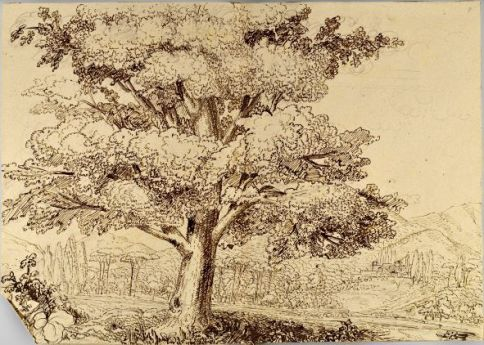 View with tree ©Superintendency of Archeology, Fine Arts and Landscape, Pietro Nobile Fund.