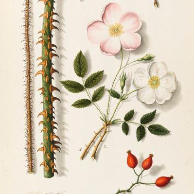 Scent Nature Beauty botanical origins Fitzwilliam Museum Cambridge