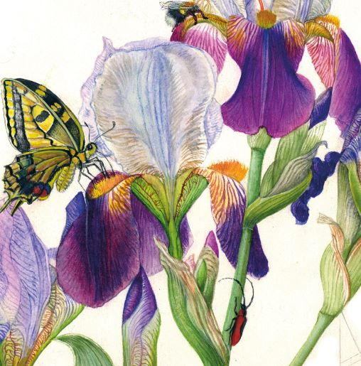 Botanical Paintings exhibitions Rome